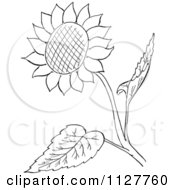 Cartoon Of A Retro Vintage Black And White Sunflower And Leaves Line Drawing Royalty Free Vector Clipart by Picsburg #COLLC1127760-0181