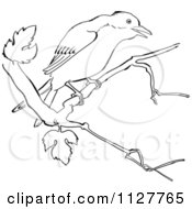 Retro Vintage Black And White Mockingbird In A Tree Line Drawing