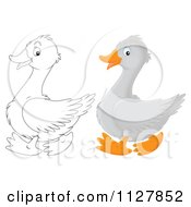 Cartoon Of Outlined And Colored Cute Geese In Profile Royalty Free Clipart