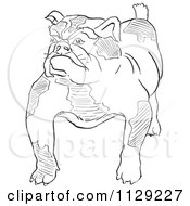 Cartoon Clipart Of An Outlined Bulldog Black And White Vector Coloring Page