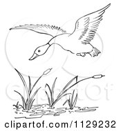 Cartoon Clipart Of An Outlined Duck Flying Over Cattails In A Pond Black And White Vector Coloring Page by Picsburg
