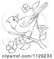 Cartoon Clipart Of An Outlined Cardinal Bird On A Blossom Branch Black And White Vector Coloring Page by Picsburg