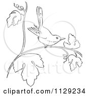 Cartoon Clipart Of An Outlined Wren On A Branch Black And White Vector Coloring Page