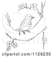 Cartoon Clipart Of An Outlined Wood Thrush In A Blossoming Tree Black And White Vector Coloring Page by Picsburg