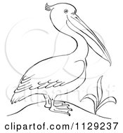 Cartoon Clipart Of An Outlined Pelican By A Plant Black And White Vector Coloring Page