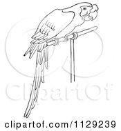 Cartoon Clipart Of An Outlined Perched Parrot Black And White Vector Coloring Page