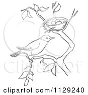 Cartoon Clipart Of An Outlined Robin On A Branch By Its Nest Black And White Vector Coloring Page by Picsburg