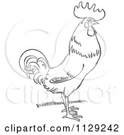 Cartoon Clipart Of An Outlined Rooster On Grass Black And White Vector Coloring Page