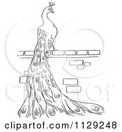 Cartoon Clipart Of An Outlined Peacock On A Brick Wall Black And White Vector Coloring Page