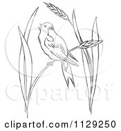 Cartoon Clipart Of An Outlined Bobolink Bird In Wheat Grass Black And White Vector Coloring Page