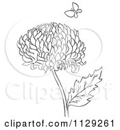 Cartoon Clipart Of An Outlined Chrysanthemum Flower And Butterfly Black And White Vector Coloring Page
