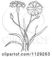 Cartoon Clipart Of An Outlined Outlined Bachelors Buttons Flower Plant Black And White Vector Coloring Page