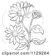 Cartoon Clipart Of An Outlined Black Eyed Susan Flower Plant Black And White Vector Coloring Page