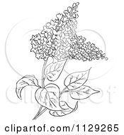 Outlined Lilac Flower Plant