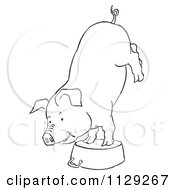 Cartoon Clipart Of An Outlined Pig Doing A Handstand On A Pot Black And White Vector Coloring Page