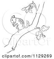 Cartoon Clipart Of An Outlined Chipmunk With A Nut In A Tree Black And White Vector Coloring Page by Picsburg