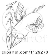 Cartoon Clipart Of An Outlined Plant With Butterflies Black And White Vector Coloring Page