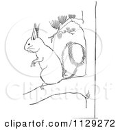 Cartoon Clipart Of An Outlined Squirrel On A Pine Tree Branch Black And White Vector Coloring Page