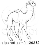 Cartoon Clipart Of An Outlined Cute Baby Camel Black And White Vector Coloring Page