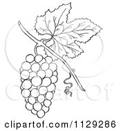 Cartoon Clipart Of An Outlined Bunch Of Grapes With A Leaf Black And White Vector Coloring Page