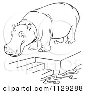 Outlined Zoo Hippo On A Pool Platform With Stairs