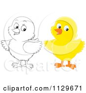 Cartoon Of Outlined And Colored Chicks Royalty Free Vector Clipart