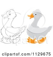 Cartoon Of Outlined And Colored Geese Royalty Free Vector Clipart by Alex Bannykh