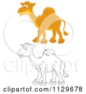 Cartoon Of Outlined And Colored Camels Royalty Free Vector Clipart