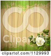 Clipart Of A White Rose Flower Wood And Green Grunge Background Royalty Free Vector Illustration