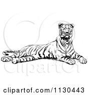 Clipart Of A Retro Vintage Black And White Resting Tiger Royalty Free Vector Illustration by Prawny Vintage