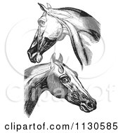 Clipart Of Retro Vintage Engravings Of Horse Head And Neck Muscles In Black And White Royalty Free Vector Illustration by Picsburg
