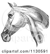 Retro Vintage Engraving Of Horse Head And Neck Muscles In Black And White 1