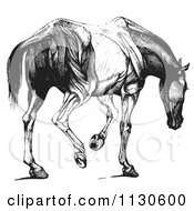 Clipart Of A Retro Vintage Engraved Horse Anatomy Of Muscular Covering Rear View In Black And White Royalty Free Vector Illustration