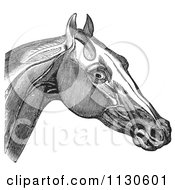 Clipart Of A Retro Vintage Engraving Of Horse Head And Neck Muscles In Black And White 2 Royalty Free Vector Illustration