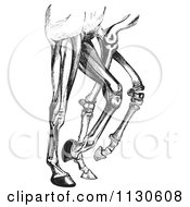 Clipart Of A Retro Vintage Engraved Diagram Of Horse Leg Muscles And Bones In Black And White Royalty Free Vector Illustration