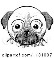 Clipart Of A Retro Vintage Black And White Pug Dog Face Royalty Free Vector Illustration by Prawny Vintage