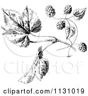 Clipart Of Retro Vintage Black And White Hops And Leaves Royalty Free Vector Illustration by Prawny Vintage