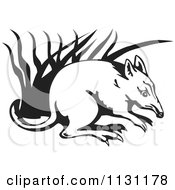 Black And White Bandicoot In Grass