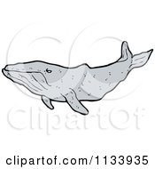 Cartoon Of A Humpback Whale Royalty Free Vector Clipart by lineartestpilot