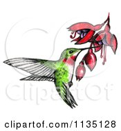 Clipart Of A Drawn And Colored Hummingbird And Bleeding Heart Flowers Royalty Free Illustration