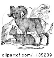 Clipart Of A Retro Black And White Bighorn Sheep Pair Royalty Free Vector Illustration