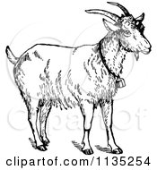 Clipart Of A Retro Vintage Black And White Goat Wearing A Bell Royalty Free Vector Illustration by Prawny Vintage #COLLC1135254-0178
