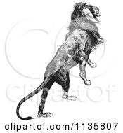 Clipart Of A Retro Vintage Majestic Lion Black And White Royalty Free Vector Illustration