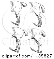 Clipart Of A Retro Vintage Engraved Horse Anatomy Of Bad Hind Quarters In Black And White 5 Royalty Free Vector Illustration