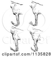 Clipart Of A Retro Vintage Engraved Horse Anatomy Of Bad Conformation Of Fore Quarters In Black And White 5 Royalty Free Vector Illustration