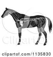 Retro Vintage Engraved Horse Anatomy Of The Circulatory System In Black And White