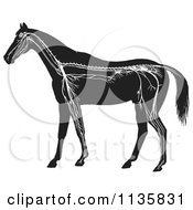 Clipart Of A Retro Vintage Horse Anatomy Of The Nervous System In Black And White Royalty Free Vector Illustration