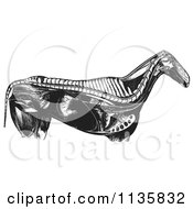 Clipart Of A Retro Vintage Engraved Horse Anatomy Of Internal Bones Organs In Black And White Royalty Free Vector Illustration
