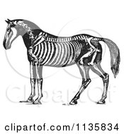 Retro Vintage Horse Anatomy Of The Skeleton In Black And White 1