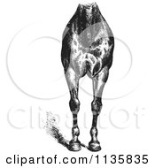 Clipart Of A Retro Vintage Engraved Horse Anatomy Of Good Breast And Limbs In Black And White Royalty Free Vector Illustration